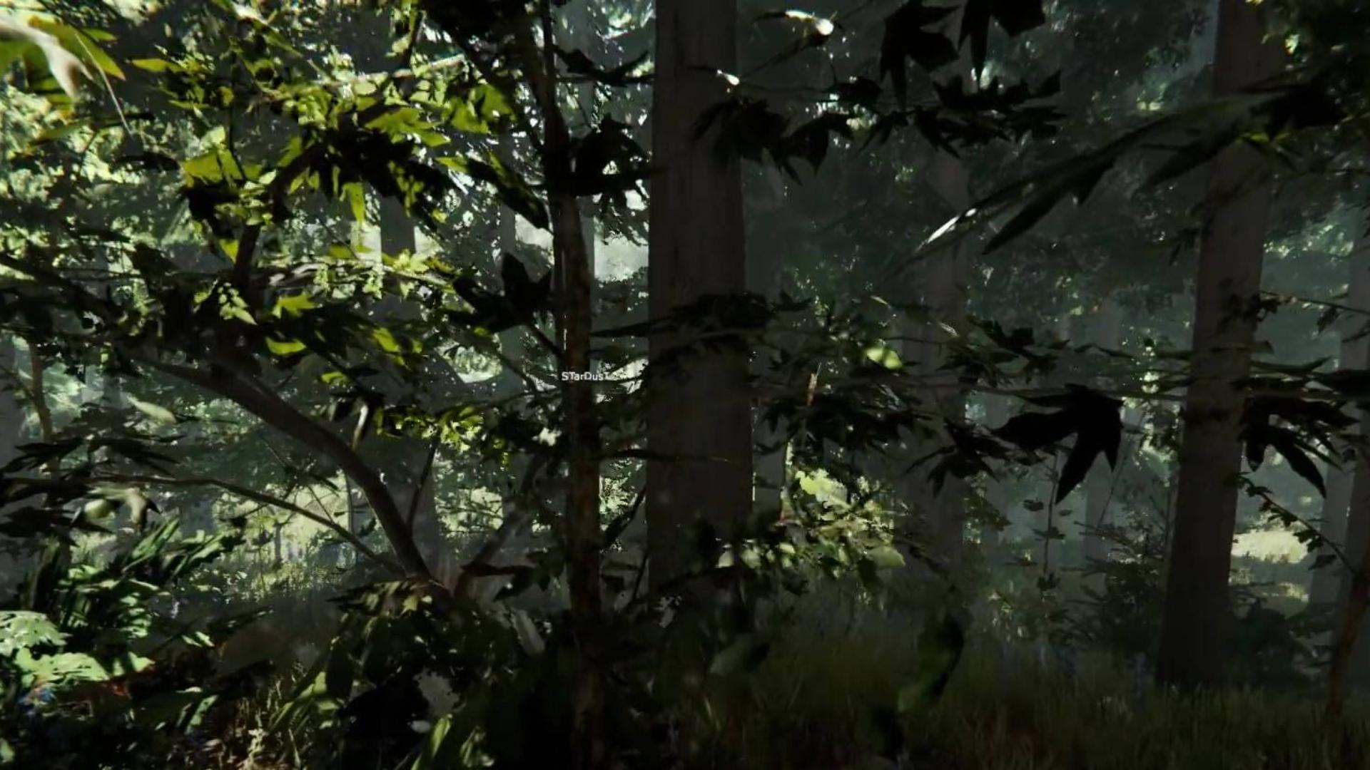 第一次玩一个游戏这么久,也许我已经爱上这片森林01