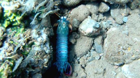 巴厘岛钓鱼潜水探索海底世界,发现漂亮的七彩皮皮虾