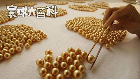 """被镀""""金""""的珍珠!走进巴拉望岛的海水养殖珠工场【寰球大百科294】"""
