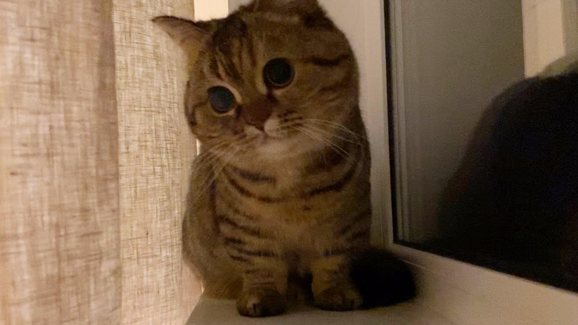 大脸猫企图卖萌俘虏人类!!!