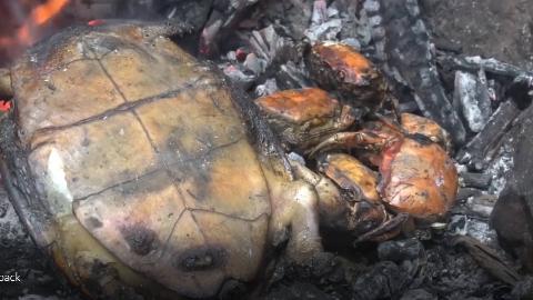 【野外生存系列】3-野外抓了个乌龟,直接烤了吃