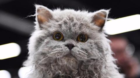 云吸猫指南--都有哪些值得一看的猫片