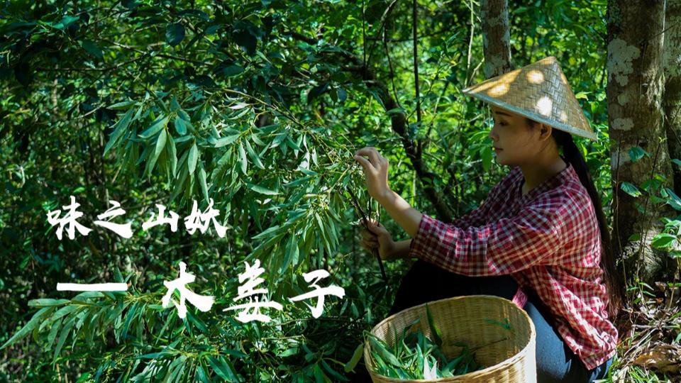 味之山妖:木姜子,它的味道独特能给普通食材增添特殊香味