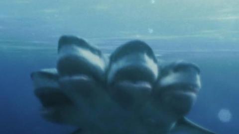 几分钟看《夺命五头鲨》鲨鱼变异长出五颗脑袋,开始攻击美国海滩