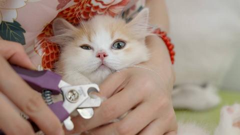 小奶猫拒绝剪指甲,铲屎官不仅唱歌还拿小鱼干哄,大猫:我也该剪了!