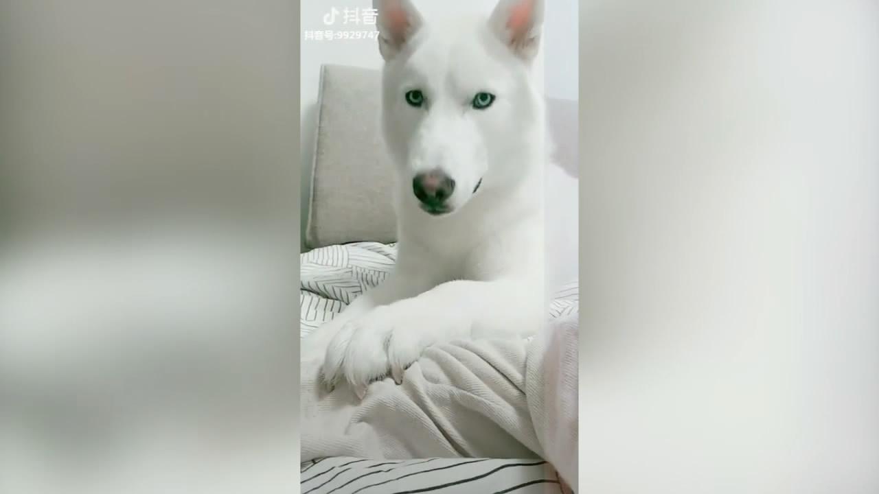 【抖音热门排行榜之动物篇】动物搞笑合集!Vol.52