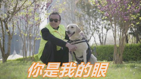 【冬呱】这种狗比大熊猫还稀有?这竟然是真的!