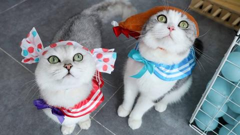 女主人玩扭蛋,一口气给4只猫换30套衣服,把猫都搞懵了