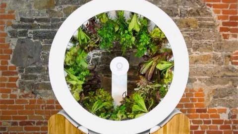 菜园做成摩天轮,能同时种100种蔬菜,房间里都能种菜了