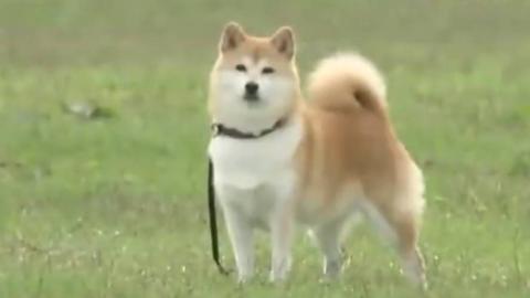 狗狗是人类最忠实的朋友...狗:???