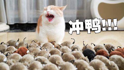 4只猫遇上50只耗子当场翻车?!猫:麻,你听我解释