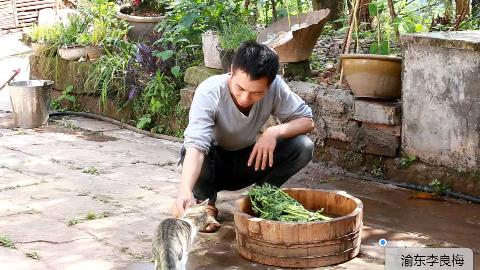给黄豆,玉米淋水,做鸭食,晒干藿香,这就是农村小伙一天的生活