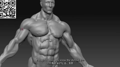 【Zbrush】人体全身肌肉骨骼结构解剖大师级教程(中英双字)