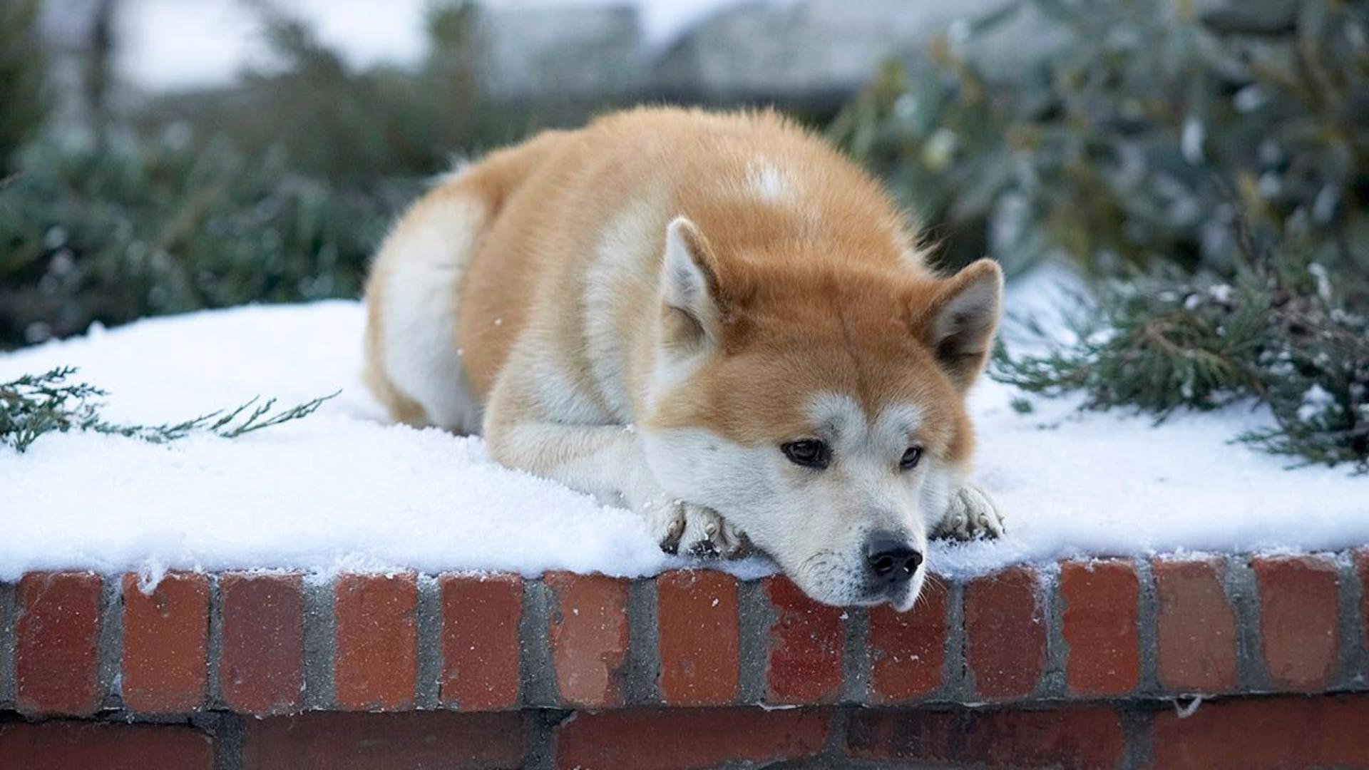 狗狗的一生都在等待主人,它不知道主人已经去世,高分催泪电影