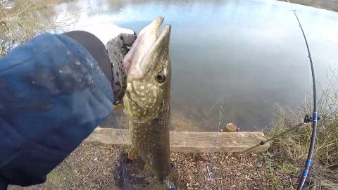 【虾子】英国湖泊钓狗鱼 #02