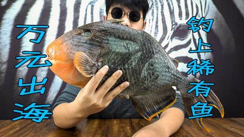 小伙花万元出海只为钓到稀有鱼 ,到底好不好吃