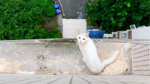 小白猫高楼探头呼救:求求你们,救救我!
