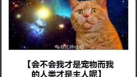 日式神吐槽之吸貓專題
