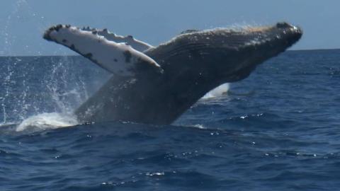 【纪录片】海中巨兽 1【双语特效字幕】【纪录片之家爱自然】
