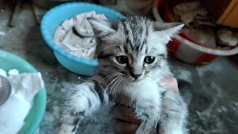 被收养的流浪猫现在生了三只小猫仔,还有人为它带孩子