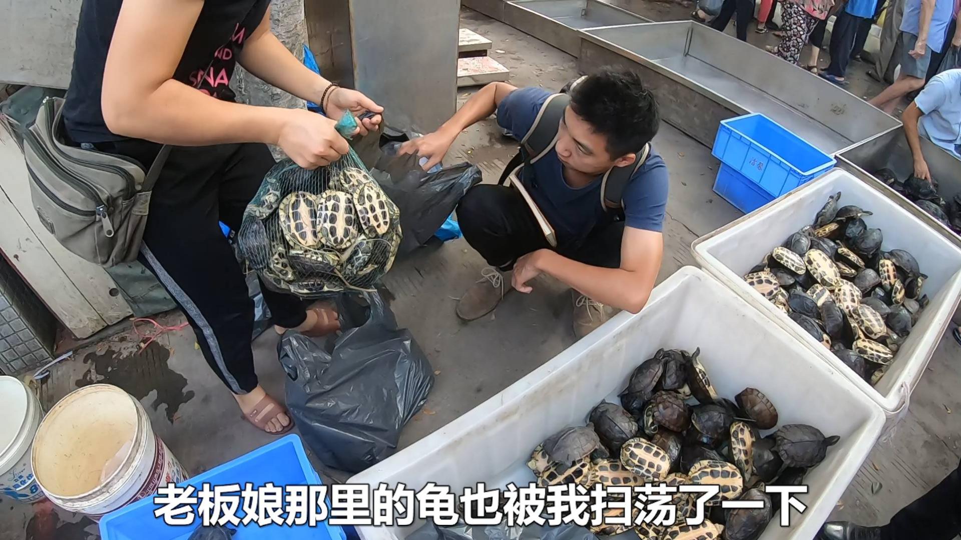 佛山顺德乌龟市场,几十块块钱一个石金钱龟,一口气买了上百个!