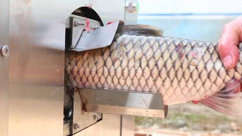杀鱼再也不用人工了,农村大叔发明杀鱼机,8秒刮鳞开肚真干净
