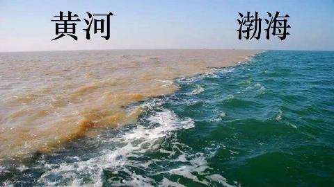 为什么渤海水和黄河水不相融?涨姿势了