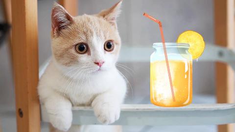 带猫咪喝下午茶,吸引了全店小姐姐的注意!店长:你啥时候再来?