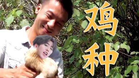 【蔡徐坤】鸡种(芒种)
