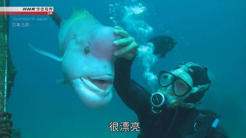 纪录片.NHK.日本之旅.馆山:奇妙的水下邂逅.2019[中英双字]