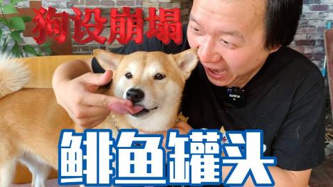 #抽#从抗拒到享受,臭出天际的鲱鱼罐头让狗子原形毕露!