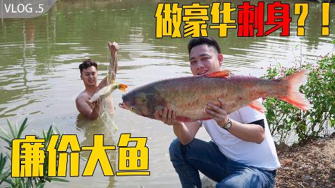 广西特色鱼生,3块一斤的大鱼,吃出300元的感觉【广西鱼生vlog 5】