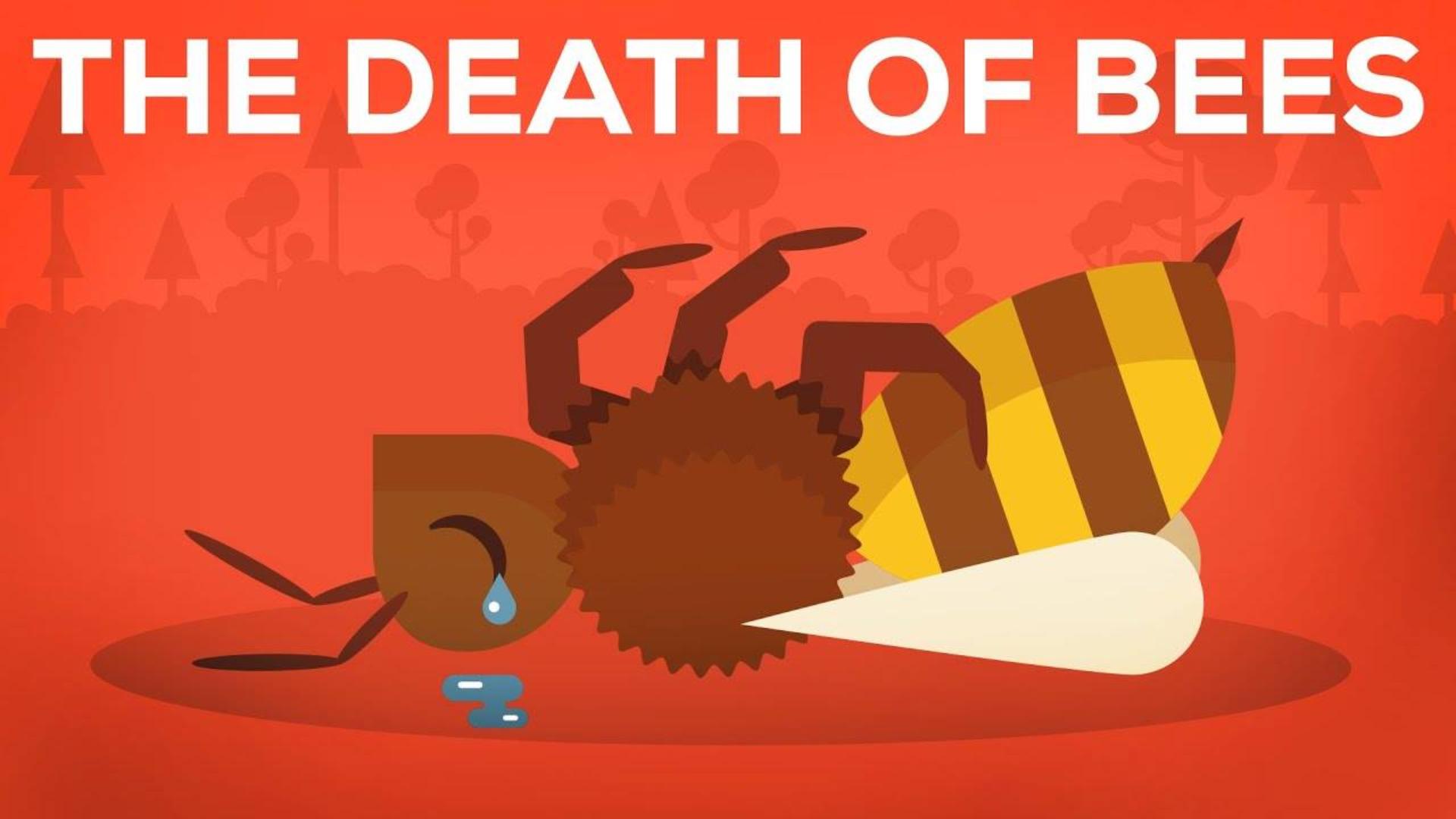 蜜蜂之死的解释-寄生虫,毒药和人类