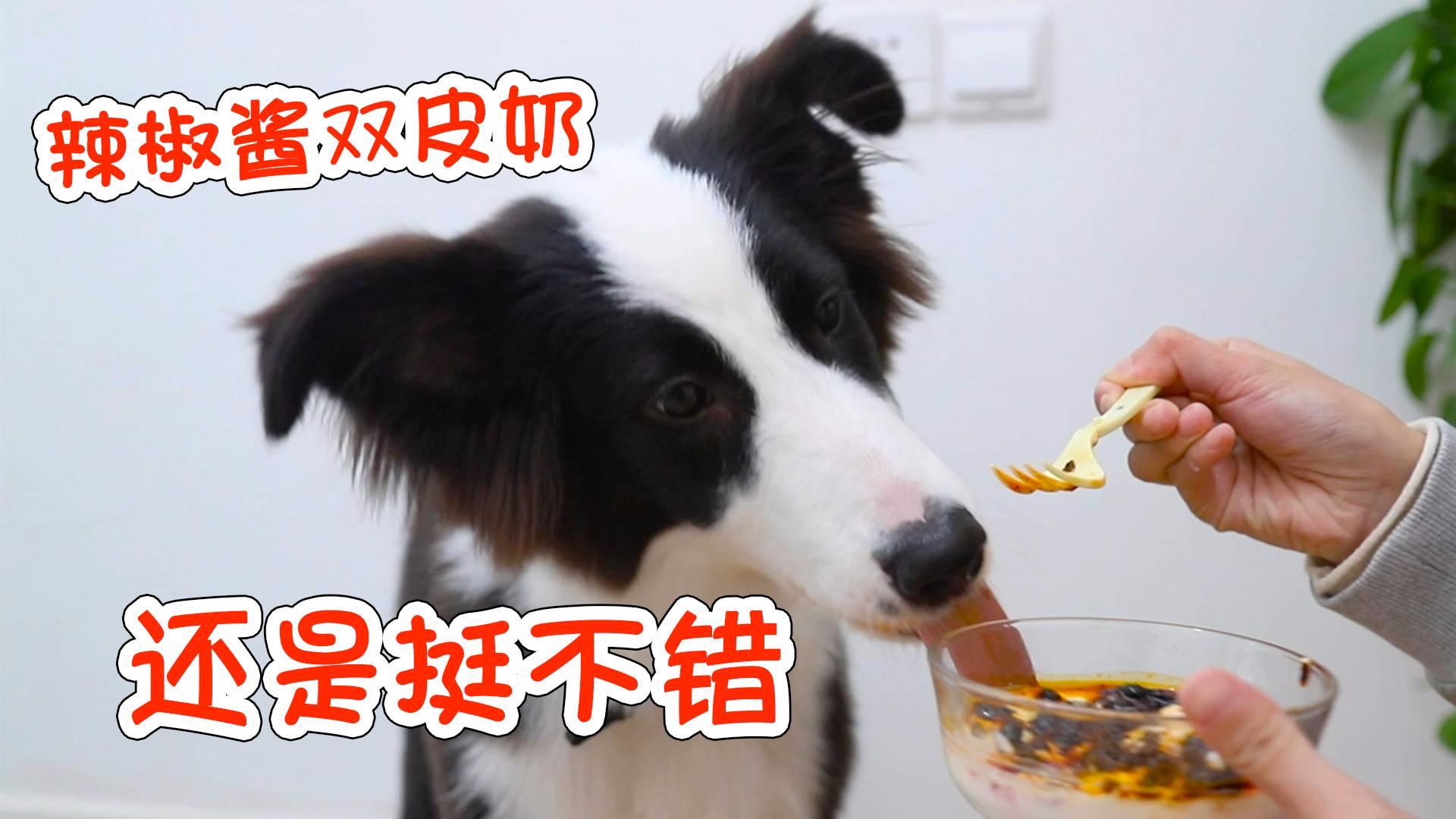 铲屎官恶搞把老干妈当红豆沙混入牛奶布丁,没想到狗狗那么喜欢