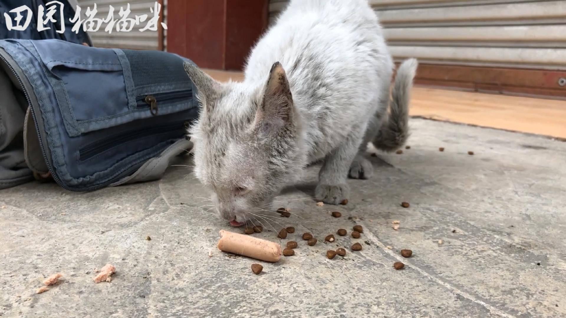 流浪猫:捡到一只白猫全身脏兮兮的,非常可爱还很粘人