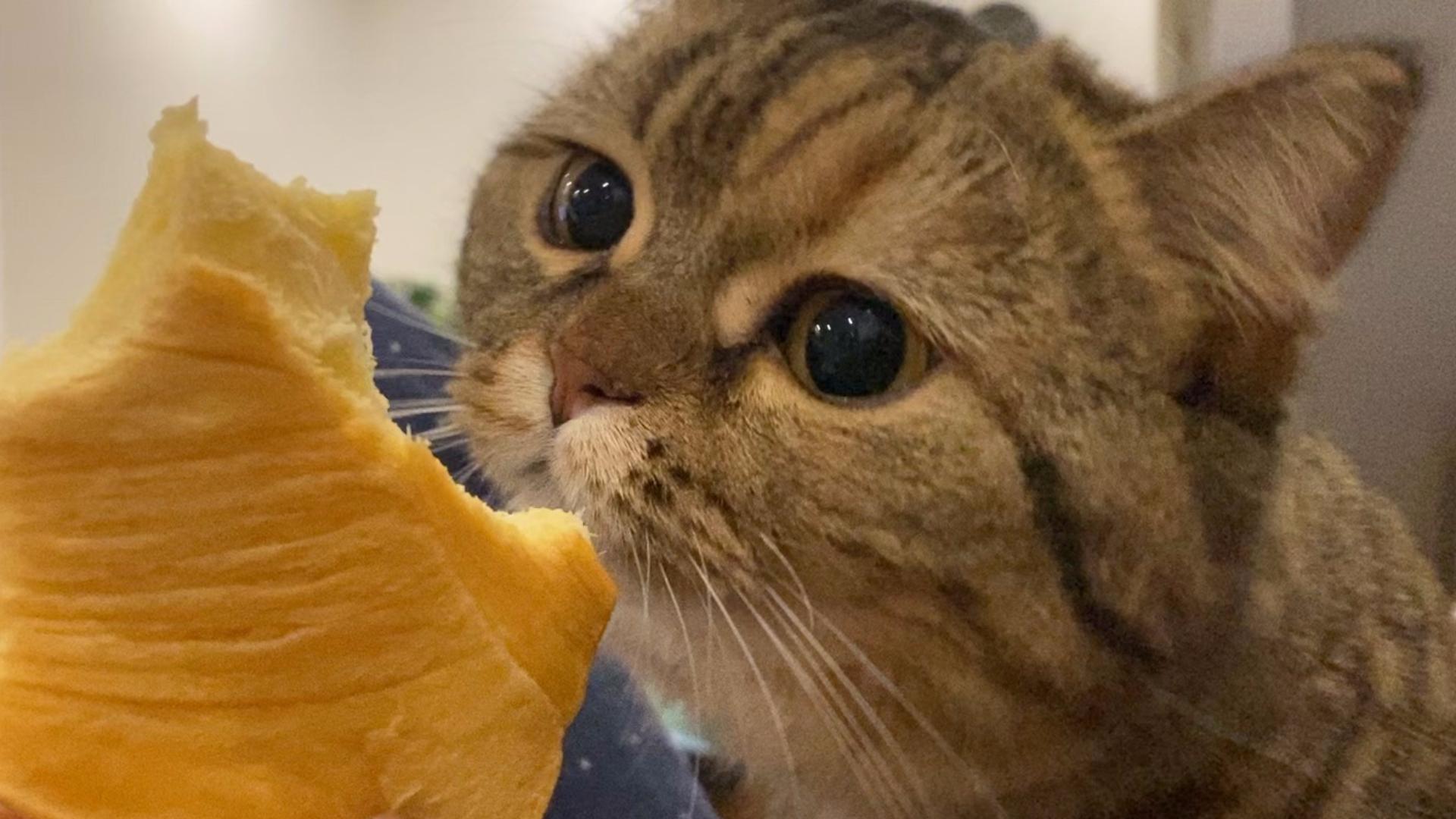这位小猫请你摆清自己在食物链顶端的位置!!!
