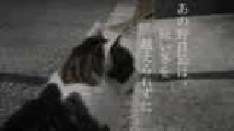 【uen翻唱】あの野良猫は、長い冬を越えられずに