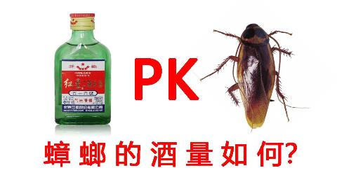 高能!蟑螂的酒量如何?喝50度二锅头和95度酒精有什么区别?