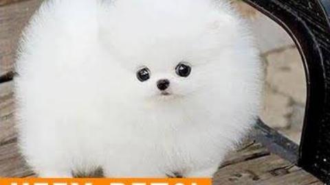 2018年最可爱的毛茸茸的宠物视频