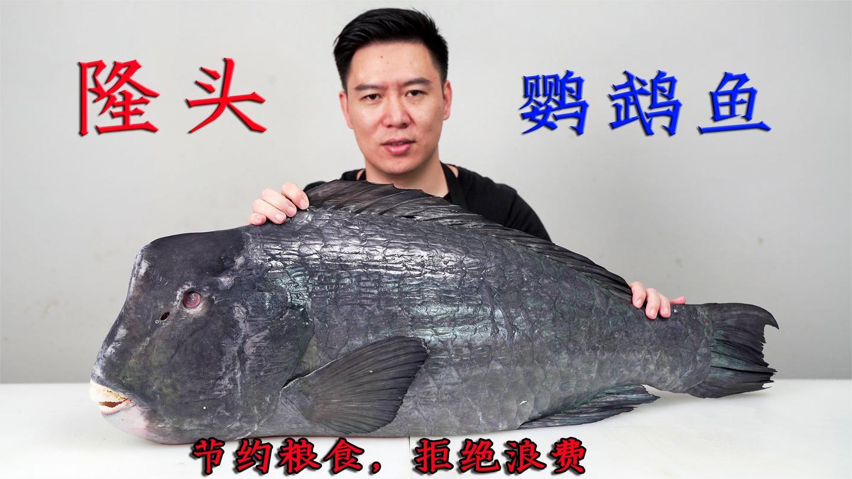 1250买一条鹦鹉鱼, 大龅牙能把礁石咬碎, 出锅后肉质紧实, 弹牙