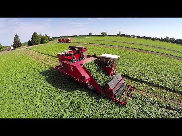 美国人是如何摘黄瓜的?看完先进的机械设备后,瞬间羡慕了!