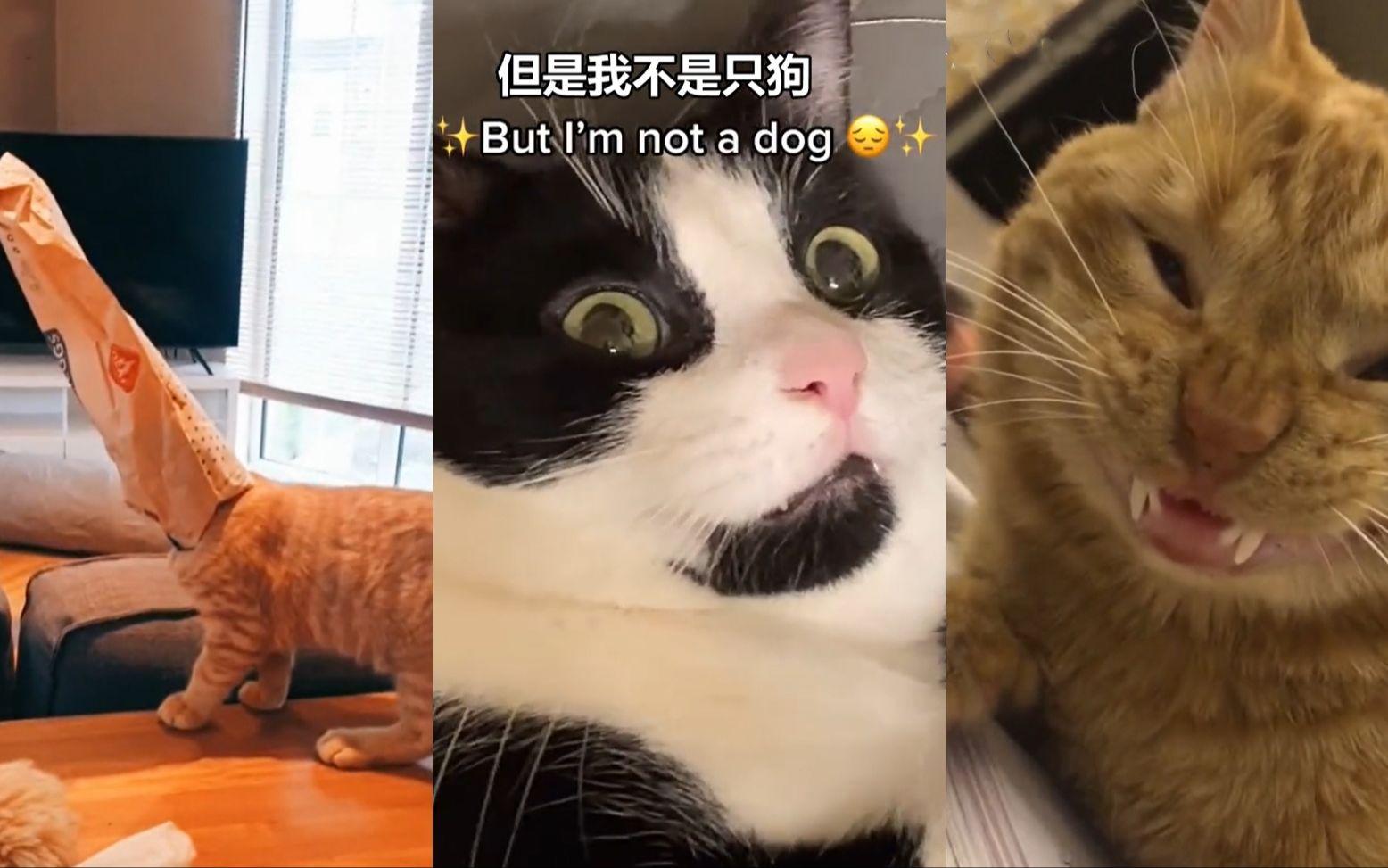 有兽医吗 我的猫好像坏了