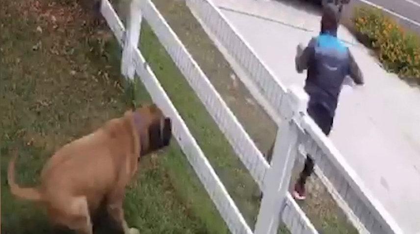 快递员送货时被大狗追吓到一秒翻越栅栏 房主: 狗子只是想求摸摸