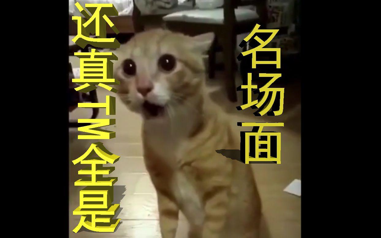 猫: 还真tm全是名场面