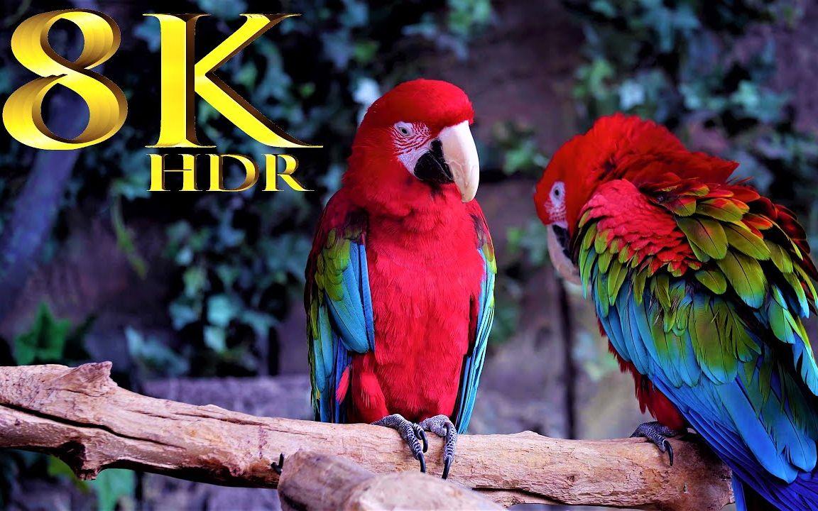 8K HDR 60FPS风景系列(超高清视频) Landscapes Collection In 8K HDR 60FPS