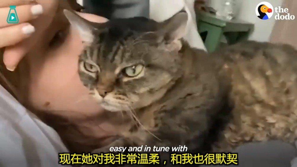 一只性格暴躁的小猫咪...