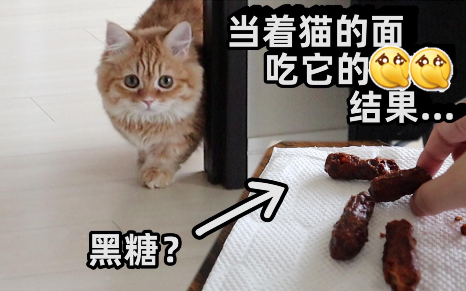 当着猫的面把它的……吃下会怎么样? 整蛊猫咪