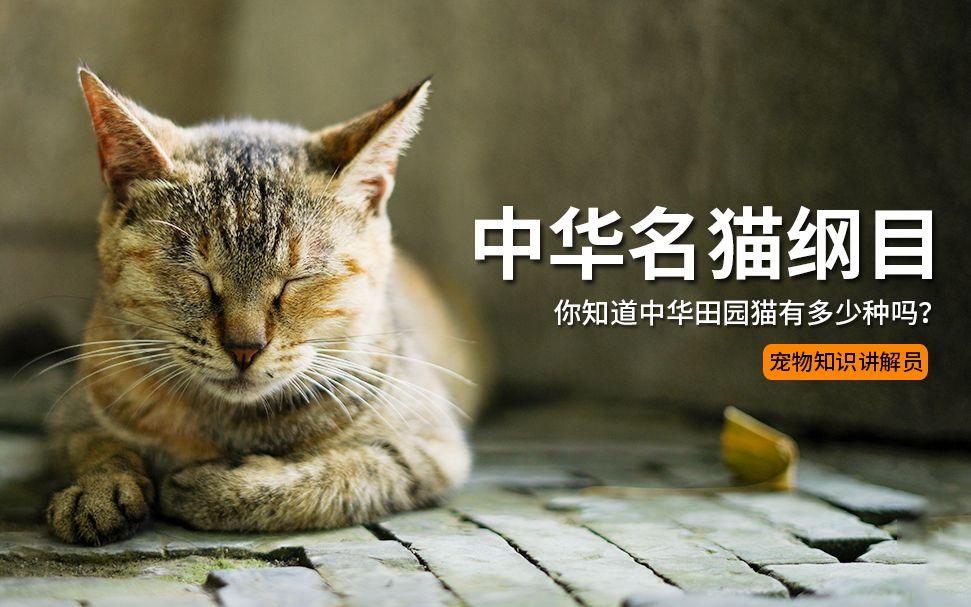 中华名猫纲目: 你知道中华田园猫有多少种吗? 它们有什么性格特点和特征吗?