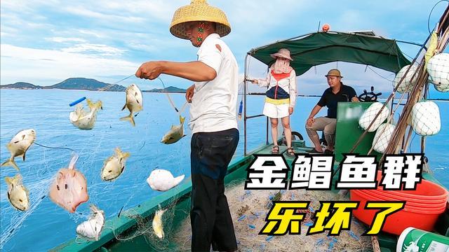 阿彬出海撞上金鲳鱼群, 女游客都激动坏了, 没想到还能看见海豚群