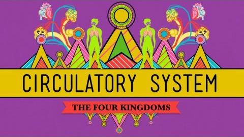 【10分钟速成课:生物学】第27集 - 循环系统